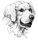 Golden Retriever Personalised Greetings Card